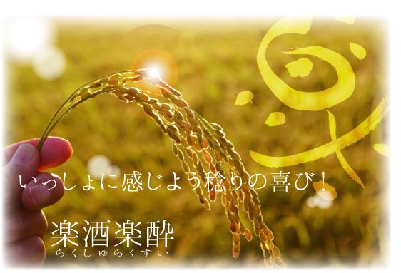 インフォメーション山田錦田稲刈り体験